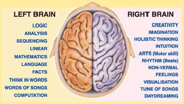 brain left and right summary
