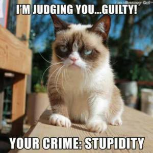 GRUMP CAT  STUPIDITY