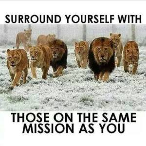 LIONS  SURROUND YOURSELF    find the others