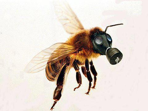 gas-masked-bee